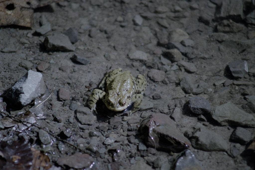 Froschwanderung #3