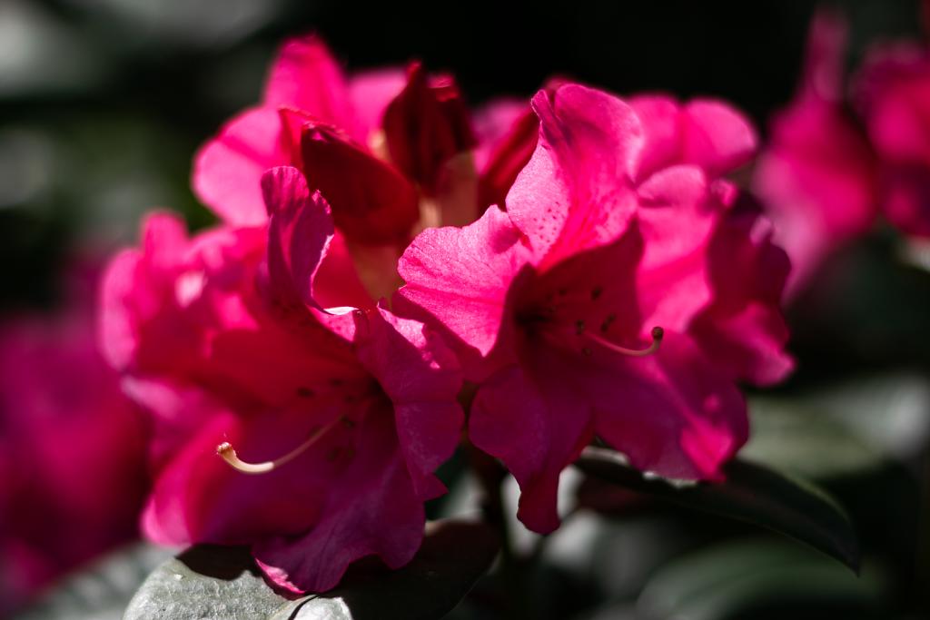 Frühlingsblüten 1
