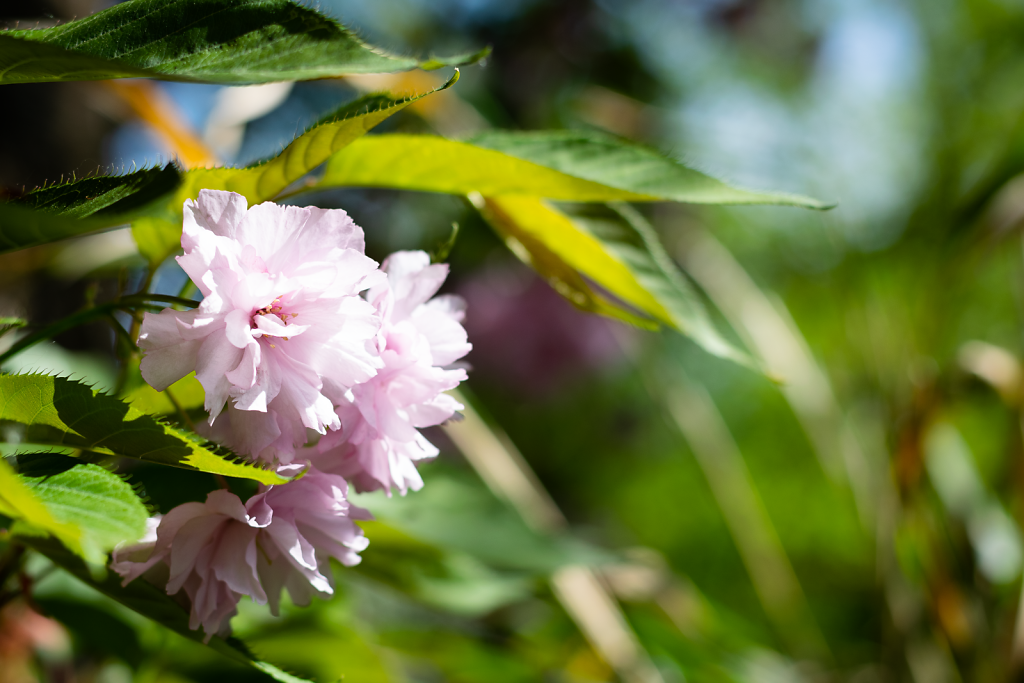 Frühlingsblüten 8